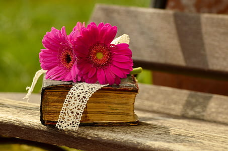 two pink flower on brown covered book