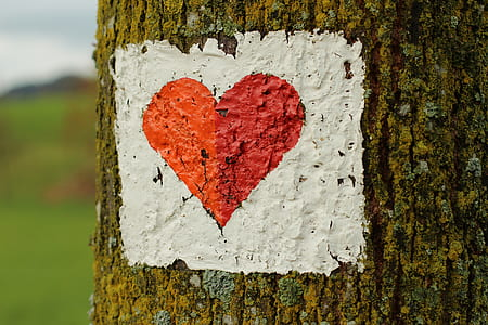 closeup photo of red heart print in tree