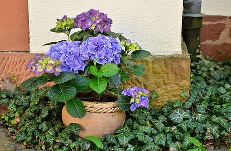 round brown potted purple flowers