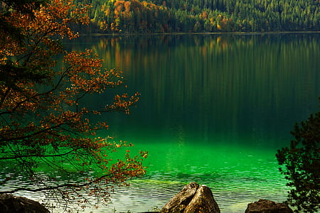 body of water near green trees at daytime