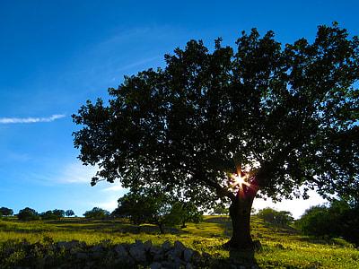 green leaf tree on green grass row under blue sky