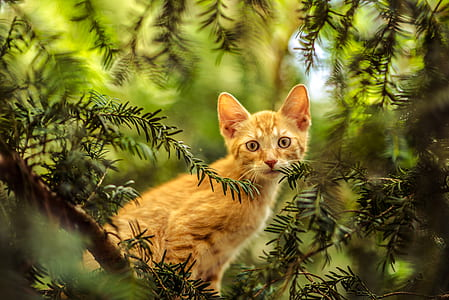 photo of orange tabby kitten on green trees