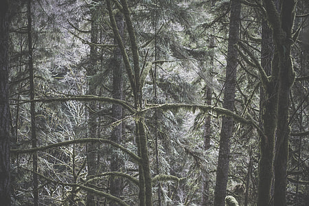 Forest Nature Tree Winter