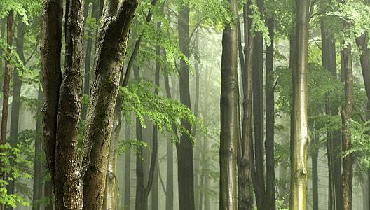 green leaf forest