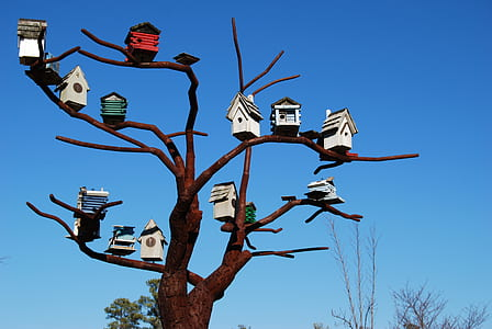 assorted-color bird house on tree photography