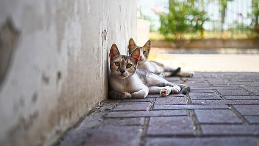 two white-black-and-brown tabby cats on concrete pavement