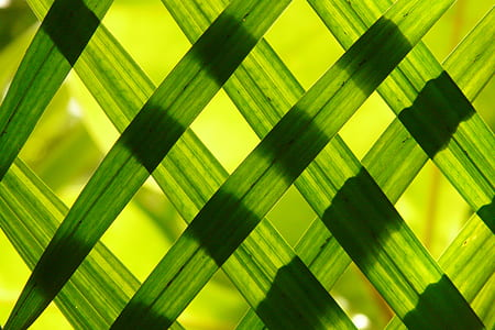 close up photography of woven leaves wallpaper