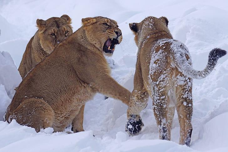 three gray cubs