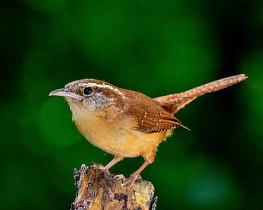 brown long-tail bird on brown wood