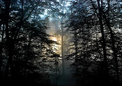 rain forest during daytime