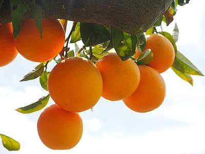 orange fruits during daytime