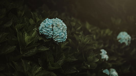 Blue Flowers With Leaves