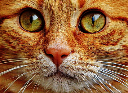 close up photography of orange Tabby cat