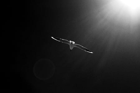 grayscale photography of flying albatross