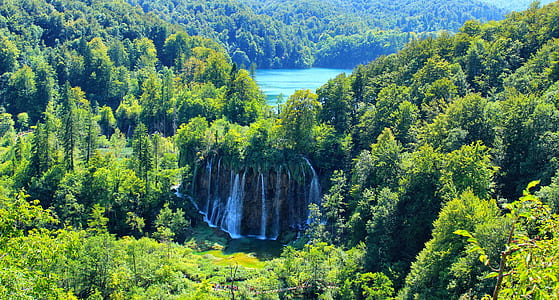 waterfalls surrounded by green tall trees birds eye photography during daytime