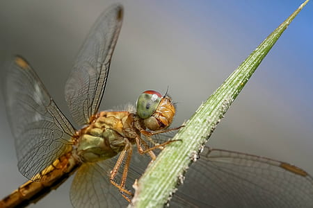 brown dragonfly on green leaf plant