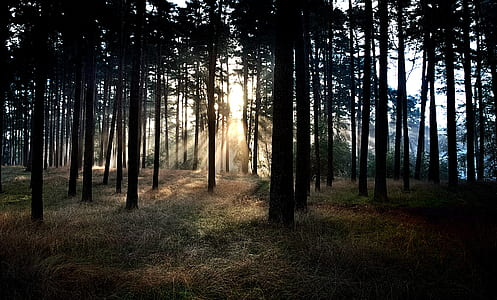 silhouette of forest during daytime
