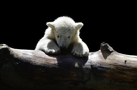 white animal lean on tree trunk