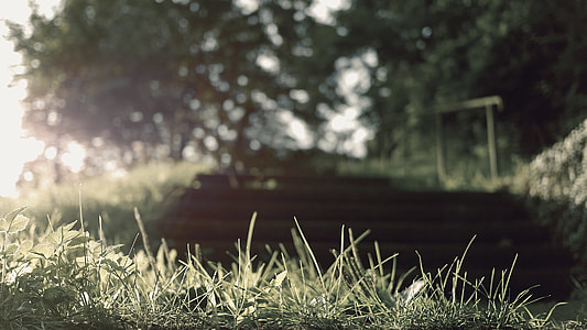 green grass Shallow Capture photography