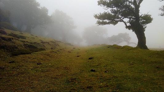 green grass field during mist