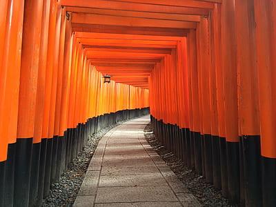 orange and black pathway