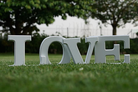 selective focus photography of white Love on green grass lawn