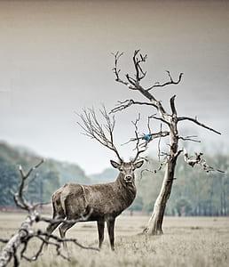 brown deer near bare tree