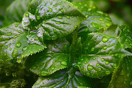 Rain Drops on Green Leaf Plant Close Up Photography