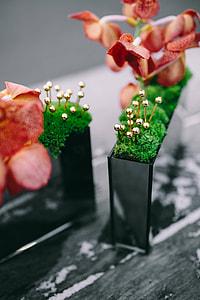 Miniature ornamental plants in rectangular boxes
