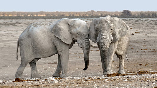 two gray elephants on gray sand under white clouds and blue sky