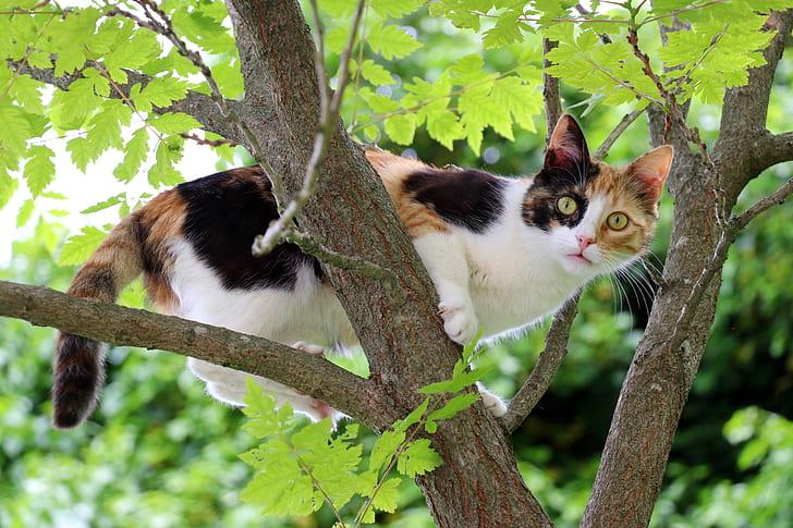 white, orange, and black cat on tree