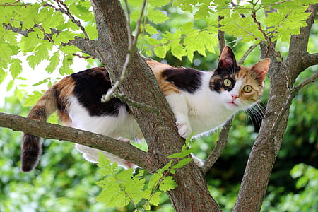 white, orange, and black cat on tree