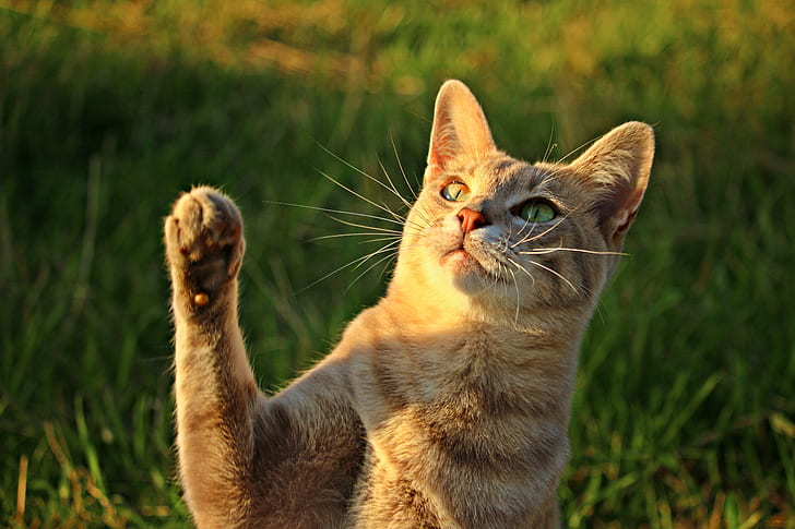 selective focus of brown tabby cat