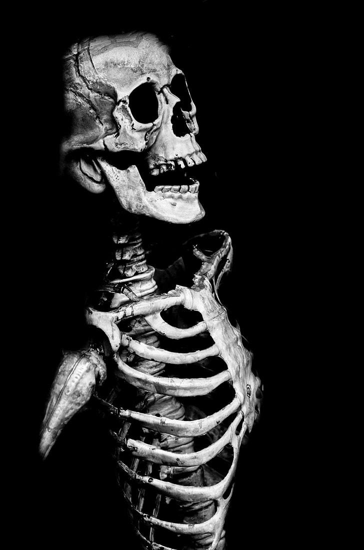Royalty Free Photo Grayscale Photo Of A Human Skeleton Pickpik