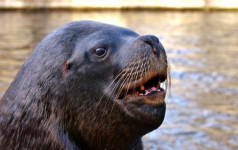 closeup photo of sea lion
