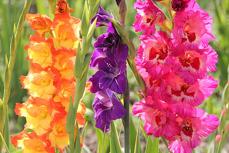 close-up photography of three assorted-color flowers