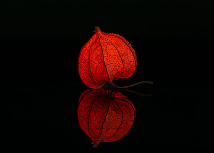red physalis in close up photography