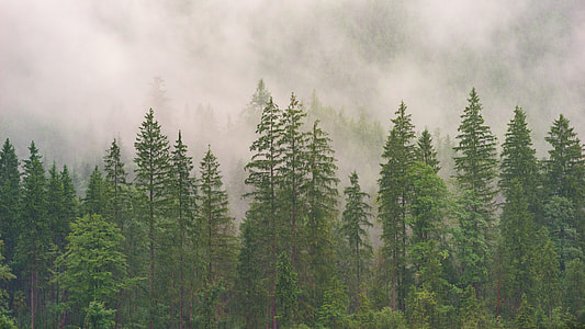 landscape photo of forest in midst of a mist