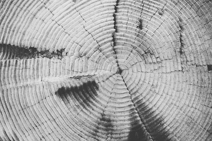 tree-rings, annulus, annual rings, tree, trunk, texture