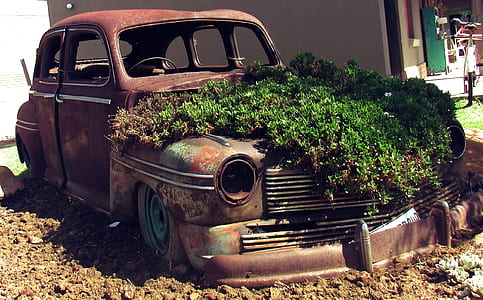 vintage car with green plants during daytime