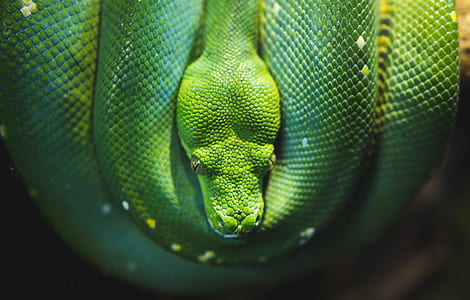 shallow focus photography of green snake