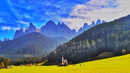 yellow plant field across mountain