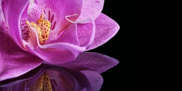 orchid, blossom, bloom, flower, plant, macro