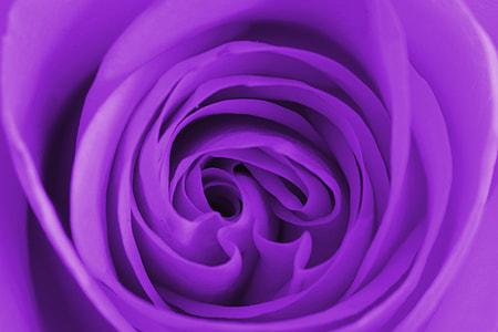 closeup photo of purple textile