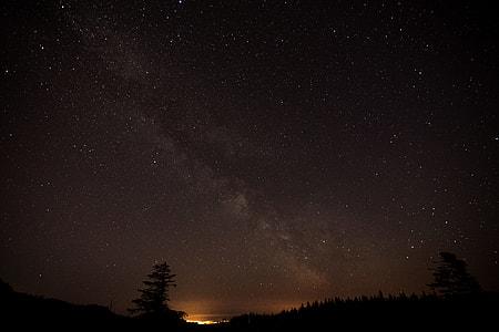 night, sky, stars, tree