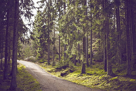 green forest pathway photograph