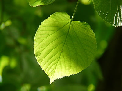 photography of green leaf with sun light