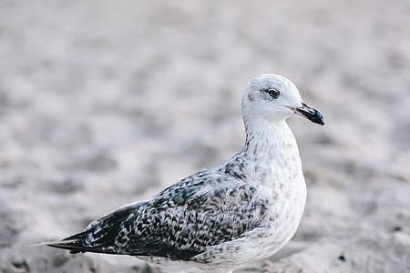 White seagull on the beach