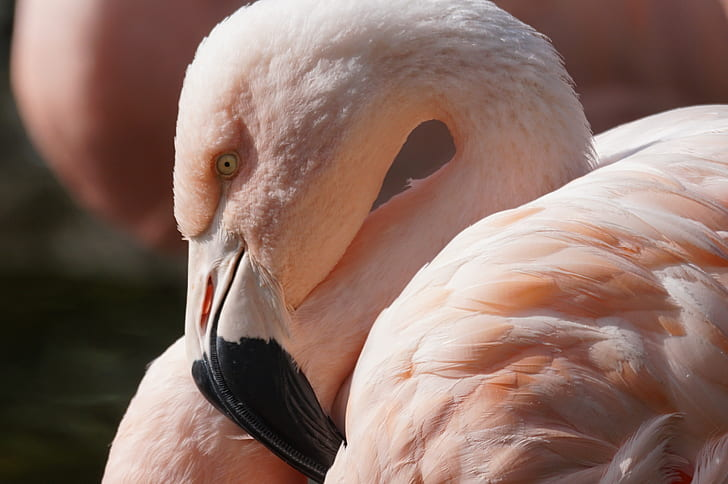 closeup photo of flamingo