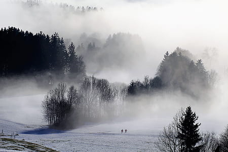 bare trees covered with fog at daytime